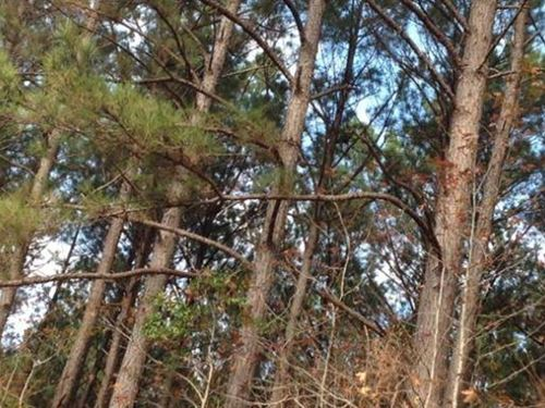 190+/- Acres Timberland W/ Home : Noxapater : Winston County : Mississippi