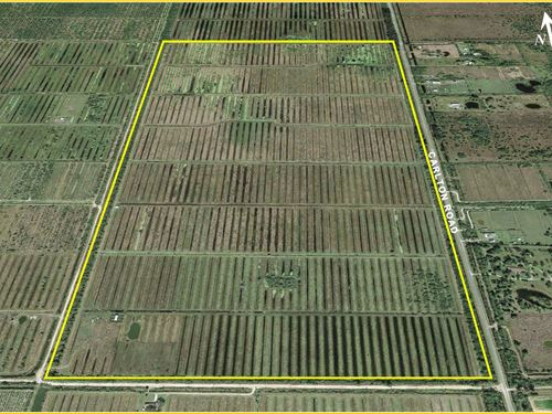 325 Acres Agricultural Land : Port St Lucie : Saint Lucie County : Florida