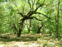 Rolling Ranch Estates : Dunnellon : Marion County : Florida