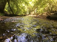 Versatile Property With Creek : Bowdon : Carroll County : Georgia
