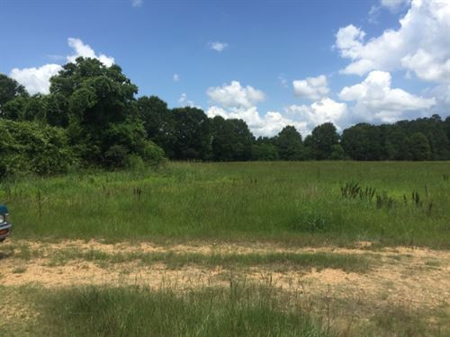 Cattle Pasture on The Bogue Chitto : Summit : Pike County : Mississippi