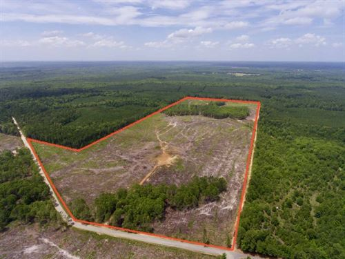 102 Acre Recreational / Timber : Benton : Bossier Parish : Louisiana