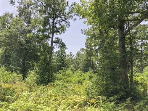 Mill Creek Acres : Silsbee : Hardin County : Texas