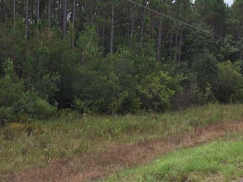 McPhail Farm Tract : Florala : Covington County : Alabama