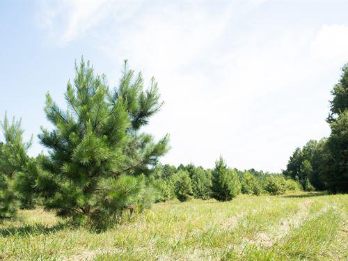 Acorn Tract : Gaffney : Cherokee County : South Carolina