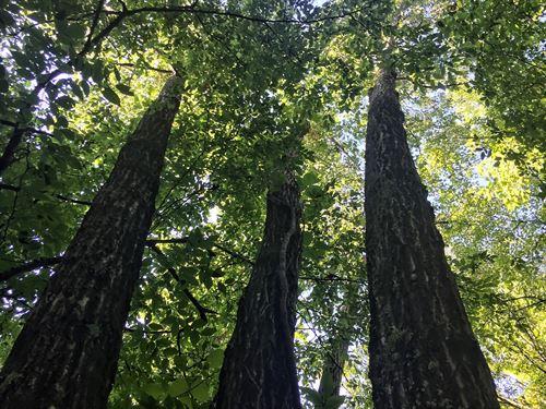 Minkum Creek 2 : Gaffney : Cherokee County : South Carolina