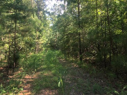 2 Acre Wooded Tract No Restrictions : Crawfordville : Taliaferro County : Georgia