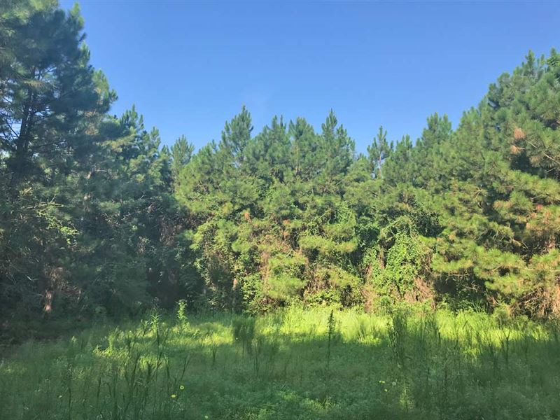 Pineview Road Tract : Flomaton : Escambia County : Alabama