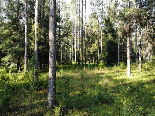 Floral City 31 Acres : Floral City : Citrus County : Florida