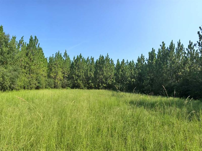Hammac Road Tract : Flomaton : Escambia County : Alabama