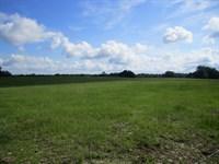 Jones 45 Acres : Newberry : Alachua County : Florida