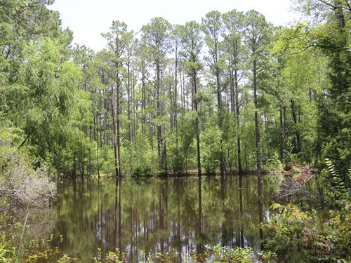 Great Home Site Hunting & Fishing : Davenport : Montgomery County : Alabama