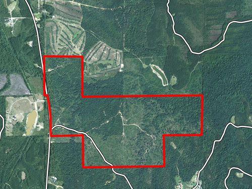 McIntosh Tract : McIntosh : Washington County : Alabama