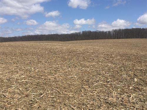 Farmland Auction In Ohio : Wapakoneta : Auglaize County : Ohio