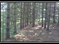 Beautiful Partially Wooded Homesite : McArthur : Vinton County : Ohio