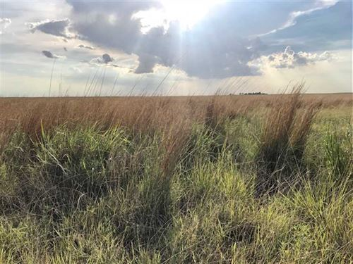 161 Acres of Crp And Good Hunti : Elkhart : Morton County : Kansas