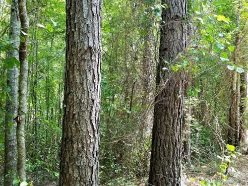 80 Acre +, Good Pine And Mixed Ha : Ramer : McNairy County : Tennessee
