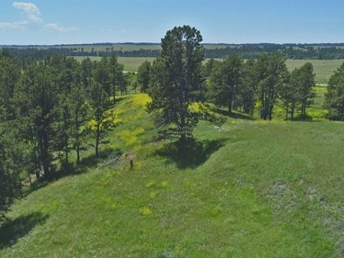 Pine Ridge Range And Timber : Crawford : Dawes County : Nebraska