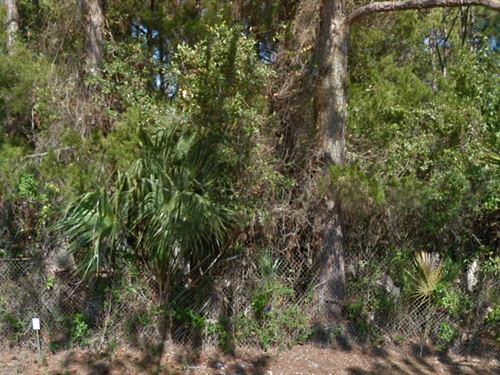 Bay County, Fl $75,000 Negotiable : Panama City : Bay County : Florida