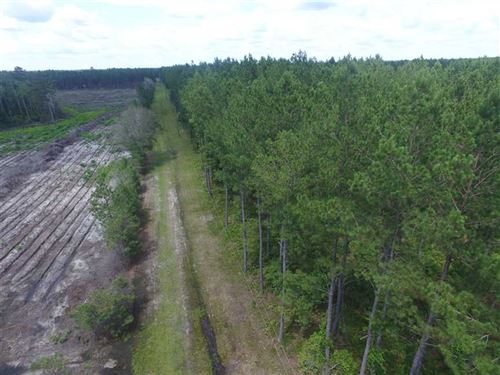 Vacant SW Oregon Trail Woods : Madison : Florida