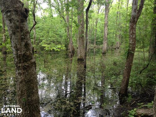 Duck And Deer Hunting Along Plum Ba : England : Jefferson County : Arkansas