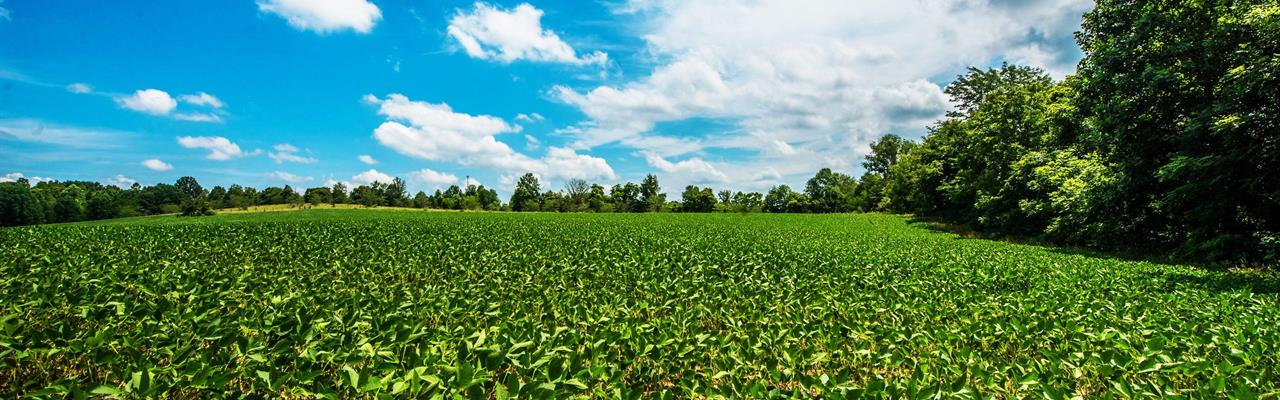 Farmland Auction : Springville : Greene County : Indiana