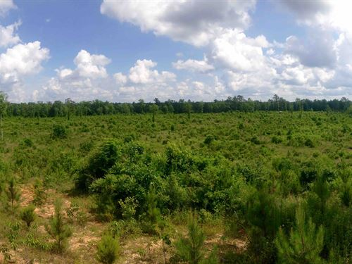 Great Hunting & Investment : Poplarville : Pearl River County : Mississippi