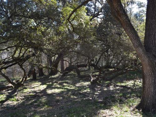 Ragsdale Acres : Burton : Washington County : Texas