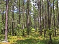 Walker Springs Hunting Camp And Tim : Jackson : Clarke County : Alabama