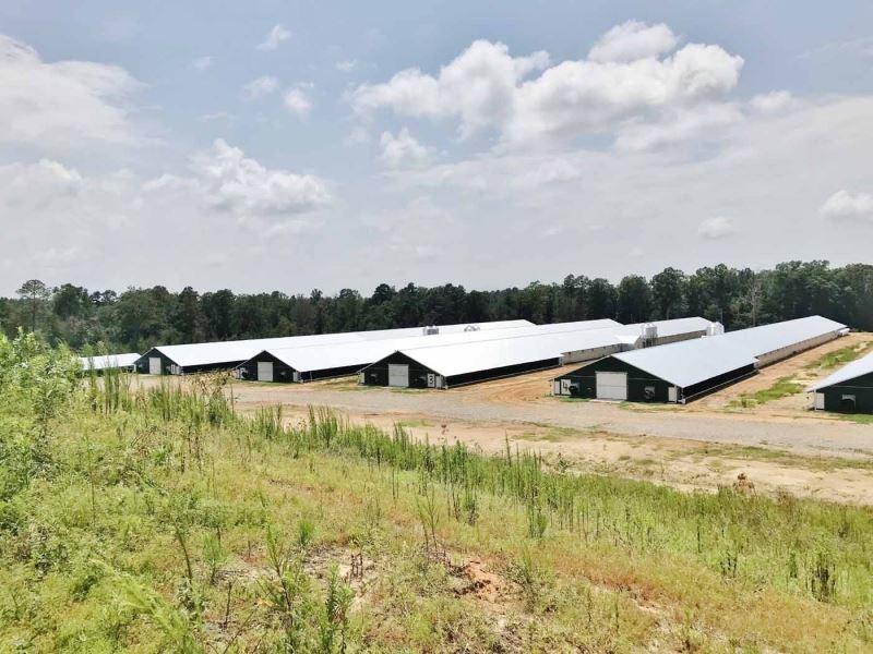 12 New Premium Pay Broiler Houses : Heidelberg : Jones County : Mississippi