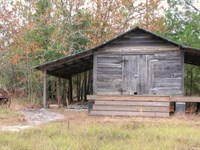 Doyle Tract - Timber & Recreation : Twin City : Emanuel County : Georgia