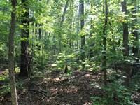 24 Acres Near Lake Wedowee : Lineville : Randolph County : Alabama