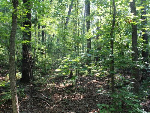 24 Acres Near Lake Wedowee : Lineville : Randolph County : Alabama