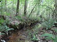 30 Acres Near Lake Wedowee : Lineville : Randolph County : Alabama
