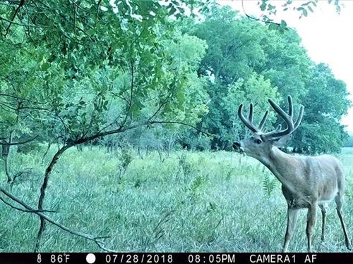75 Acre Hunting, Pasture, And : Junction City : Geary County : Kansas