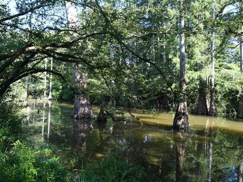 493.89 Acre Hunting Property And : Moscow : Lincoln County : Arkansas