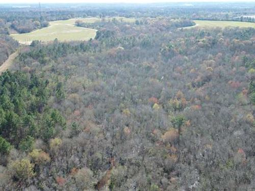 177 Acres Hunting Land For Sale : Poulan : Worth County : Georgia