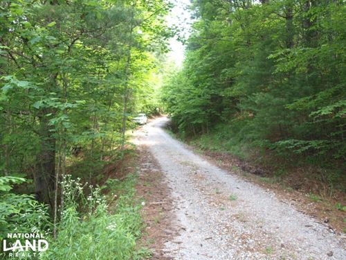 Woodland Lot, Near Creek in Establi : Spruce Pine : Mitchell County : North Carolina