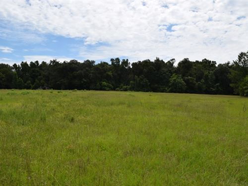 Beautiful 10.8 Acres : Brooksville : Hernando County : Florida