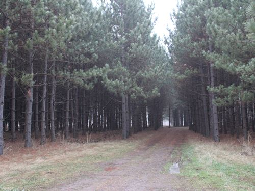 128 Acres Prime Hunting Property : Gilman : Taylor County : Wisconsin