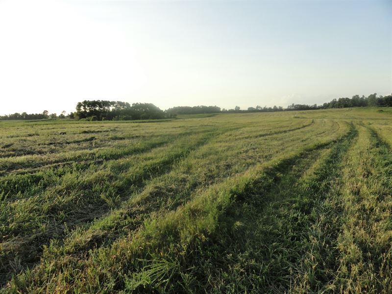 Absolute Auction - 475+/- Acres : Sonora : Hardin County : Kentucky