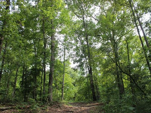 Middle Ga Hunting Tract : Macon : Bibb County : Georgia