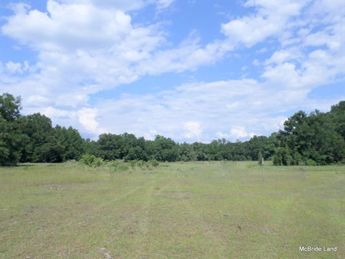 Morriston - 17 Acres : Morriston : Levy County : Florida