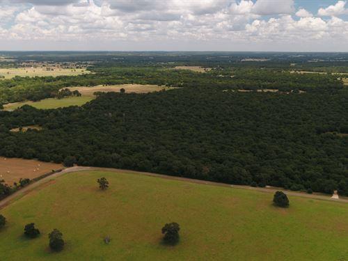 Beautiful, Raw 35.75 Acre Tract : Lexington : Lee County : Texas