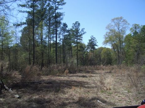 86.71 Acre Development Tract : Warner Robins : Houston County : Georgia