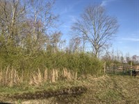 Undeveloped 42 Acres With Privacy : Cullman : Cullman County : Alabama