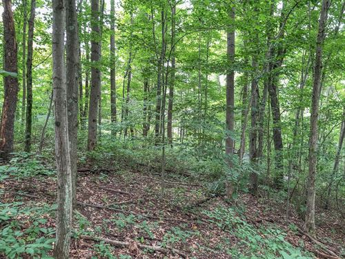 Hopewell Rd, 13 Acres : Cambridge : Guernsey County : Ohio