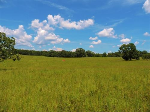 Cattle Farm With 3 Ponds : Tignall : Wilkes County : Georgia