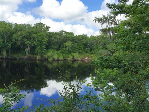 119+ Acres With River Frontage : Live Oak : Suwannee County : Florida