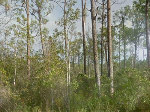Beautiful Wooded Lot : Lake Wales : Polk County : Florida